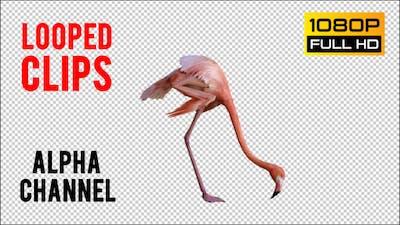 Flamingo 1 Realistic