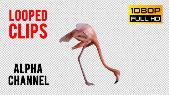 Thumbnail for Flamingo 1 Realistic