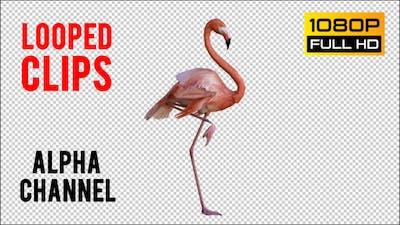 Flamingo 2 Realistic