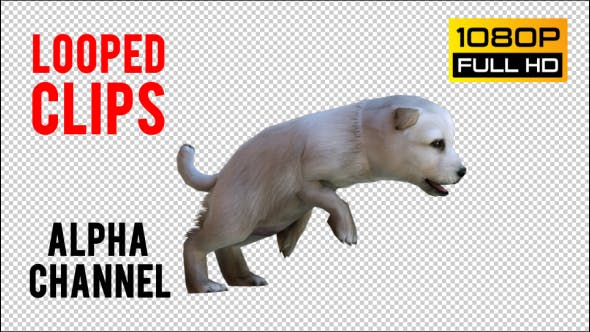 Thumbnail for Puppy 3 Realistic Pack 2
