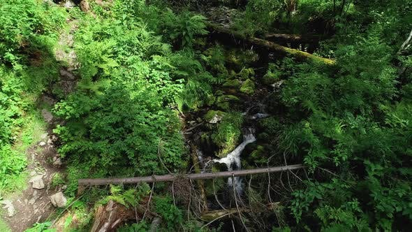 Thumbnail for Clean creek in the forest near the waterfall