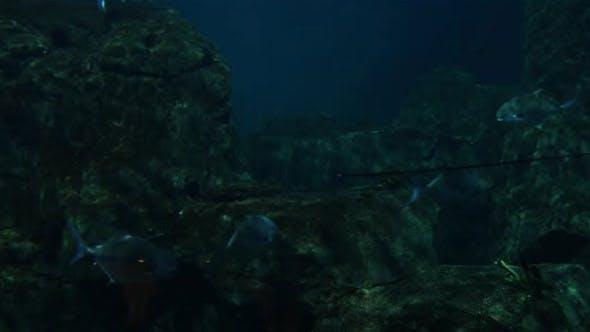 Cover Image for Aquarium Fishes