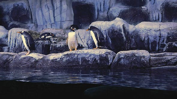 Thumbnail for Aquarium Penguins