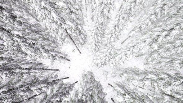 Cover Image for Flight Above Winter Forest