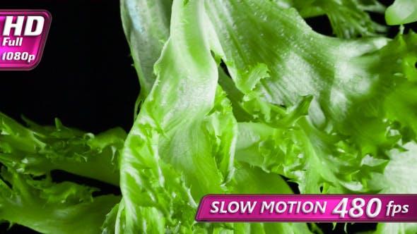 Thumbnail for Lettuce Leaves In Flight