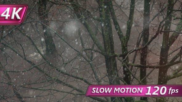 Thumbnail for First Snowfall