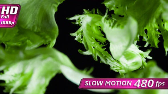 Thumbnail for Juicy Lettuce Leaves