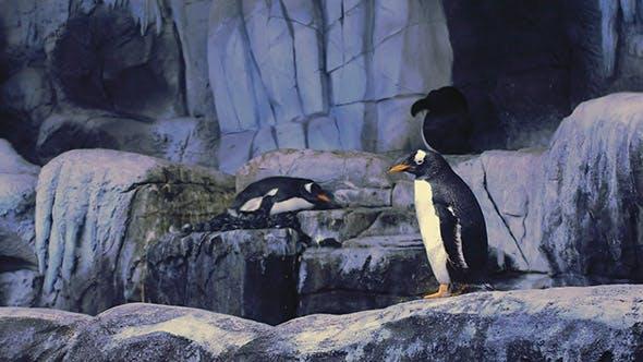 Thumbnail for Penguins