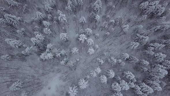Thumbnail for Top View of Snowy Trees in Forest