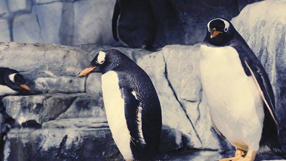 Cover Image for Penguins  Aquarium