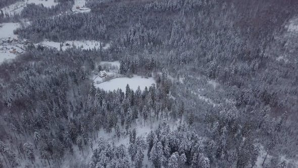 Thumbnail for White Trees in Snowy Landscape