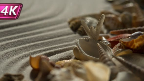 Thumbnail for Seashells and Sea Sand