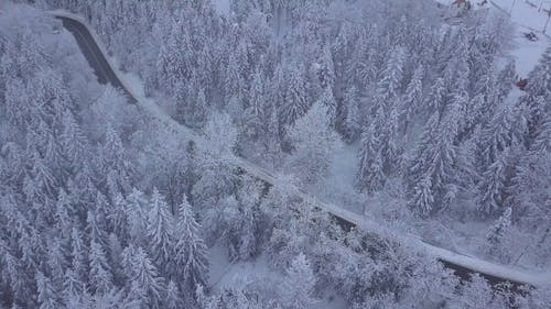Forest with Roadway in Winter Time
