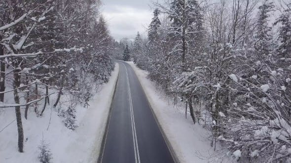 Thumbnail for Paved Road Among Snowy Trees