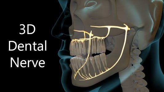 3D Dental Nerve