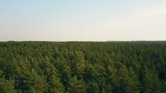 Cover Image for Drone Flying Right and Forward Over Windy Forest