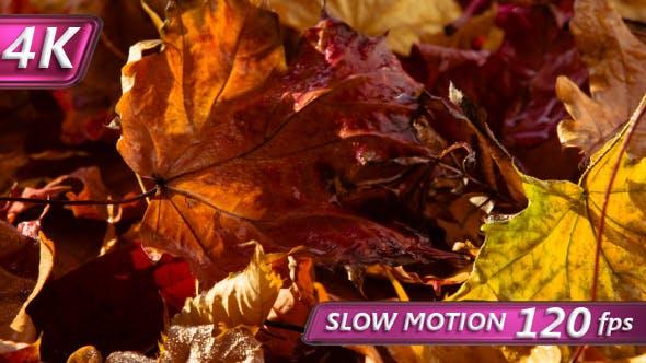 Thumbnail for Theme Of Bright Autumn