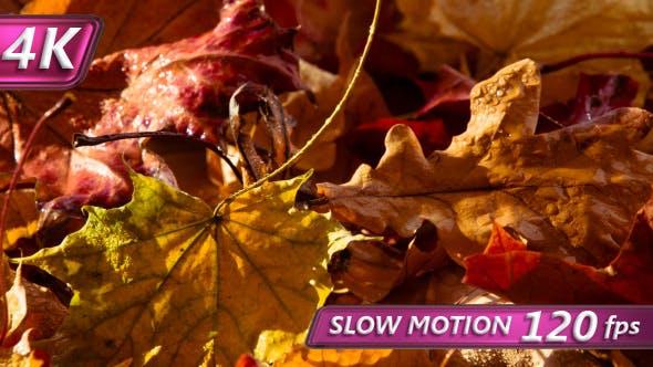 Thumbnail for Autumn Theme