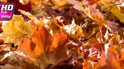 Fragile Autumn Leaves