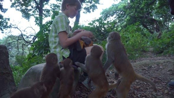 Thumbnail for The Girl Feeds Wild Monkeys