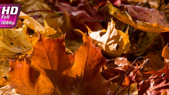Thumbnail for Latest Drops Of Autumn Rain