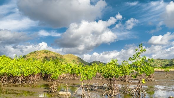 Cover Image for Сlouds Over Mangrove Trees at the Lombok Island, Indonesia