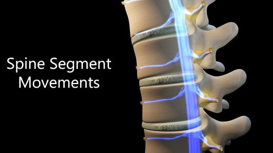 Thumbnail for Spine Segment Movements