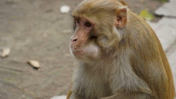 Thumbnail for The Monkey Eats a Banana