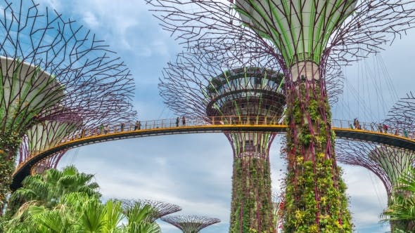 Cover Image for Futuric Super Trees in Garden By the Bay at Singapore