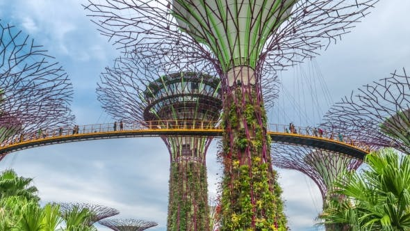 Cover Image for Futuric Super Trees in Garden By the Bay at Singapore. August 2017.  Move Up.