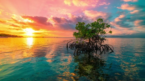 Cover Image for Ocean at Colorful Bright Sunset with Clouds and Reflection of a Mangrove Tree in Water in Nusa