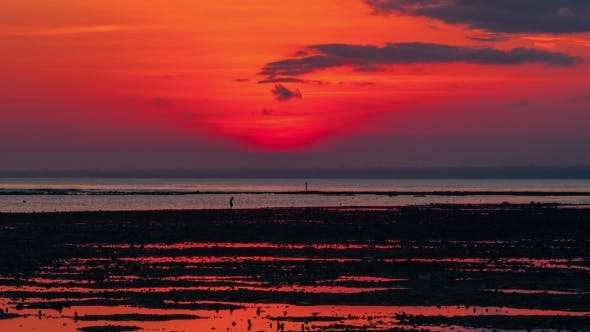 Thumbnail for A Man at Low Tide at Sunset Gathers Seashells in Nusa Lembongan, Indonesia
