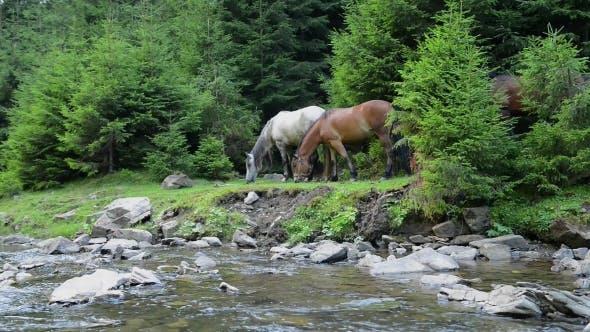 Thumbnail for Horses Graze Near a Mountain River