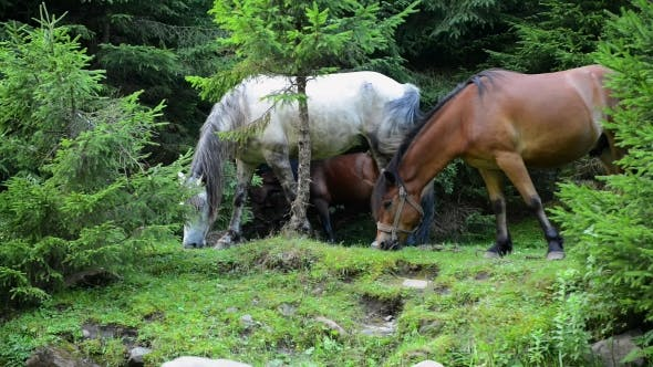 Thumbnail for Horses Graze in the Forest