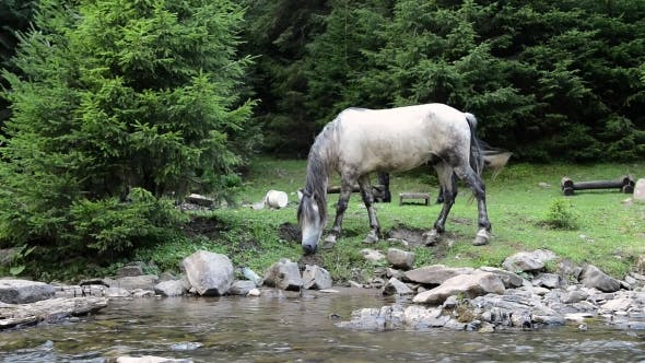 Thumbnail for Horses Graze Near a Mountain River