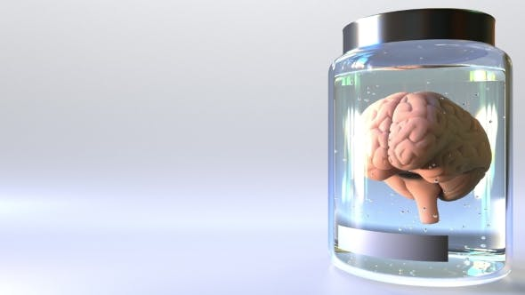 Human Brain in a Jar