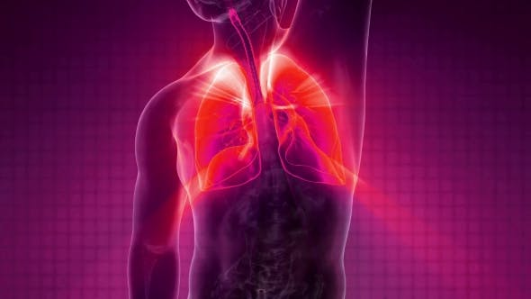 Cover Image for Human Body with Visible Lungs