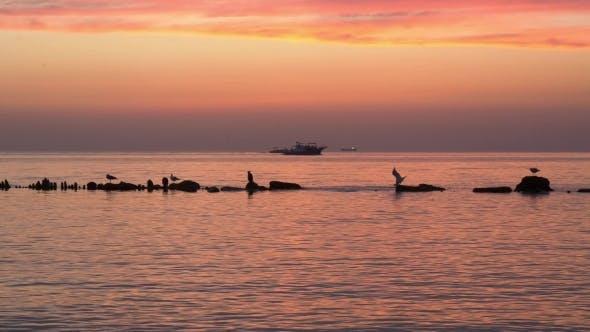 Gently Pink Sea Sunset