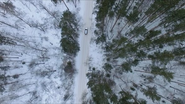 Thumbnail for Car on a Forest Road