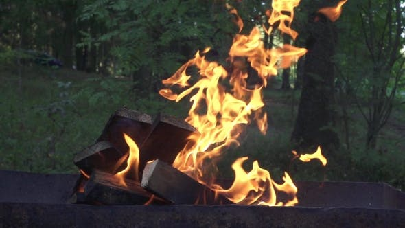 Burning Firewood in Brazier for Cooking Food on Background Summer Nature