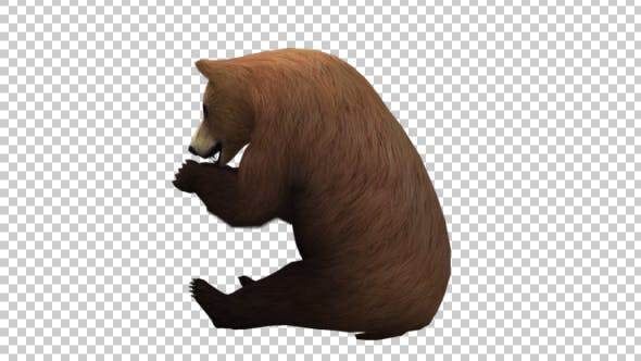 Thumbnail for Bear Eat