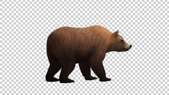 Thumbnail for Bear Looking Around