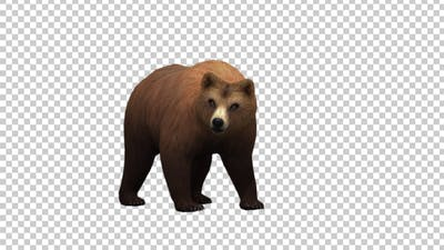 Bear Idle