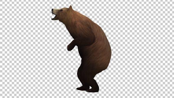 Bear Howl
