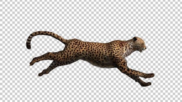 Thumbnail for Cheetah Run
