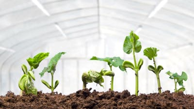 Growing Plants in Greenhouse