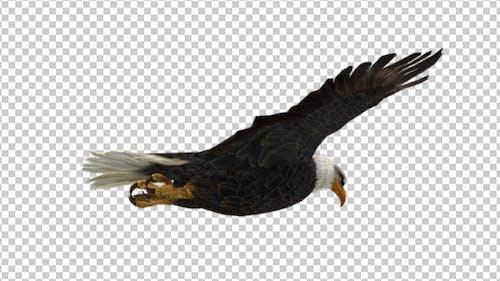 Eagle Glide