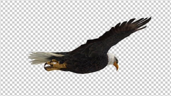 Thumbnail for Eagle Flying
