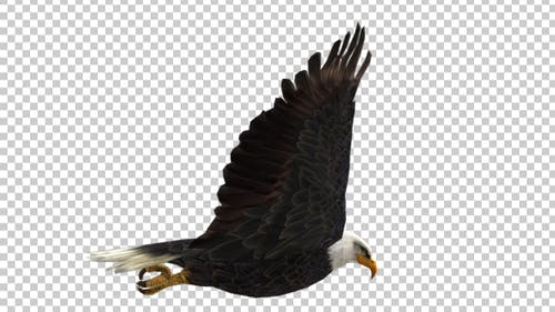 Eagle Flap