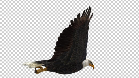 Thumbnail for Eagle Flap